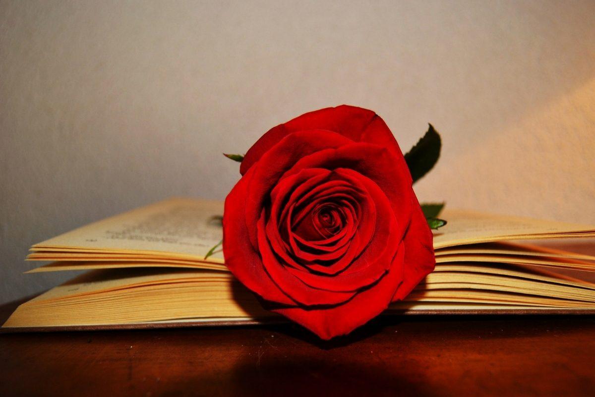 Vivez une Saint Jordi romantique en famille à Caldea !