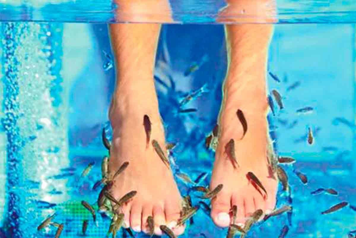 Nueva piscina exterior en Caldea con ictioterapia